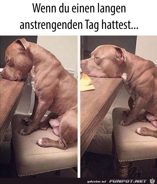 Hund ist müde