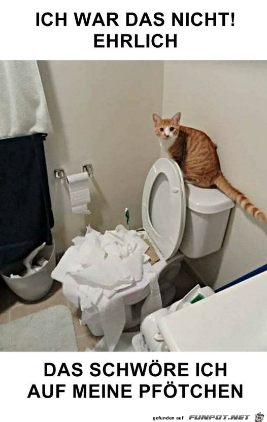 Katze und Klopapier