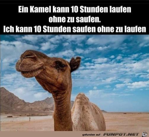 Ein Kamel und ich