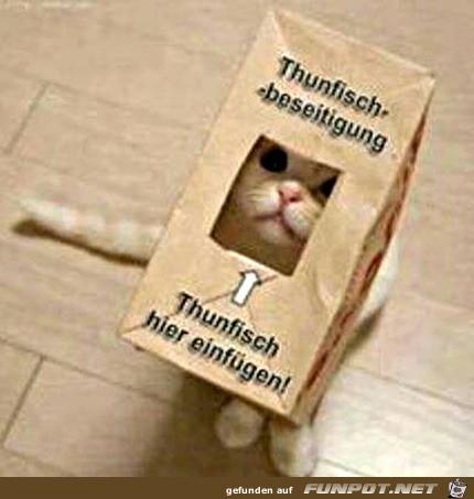 Katze mit Thunfisch-Tüte