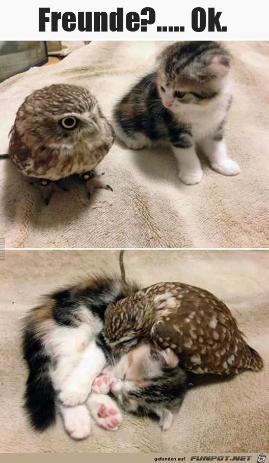 herzige Tierbilder