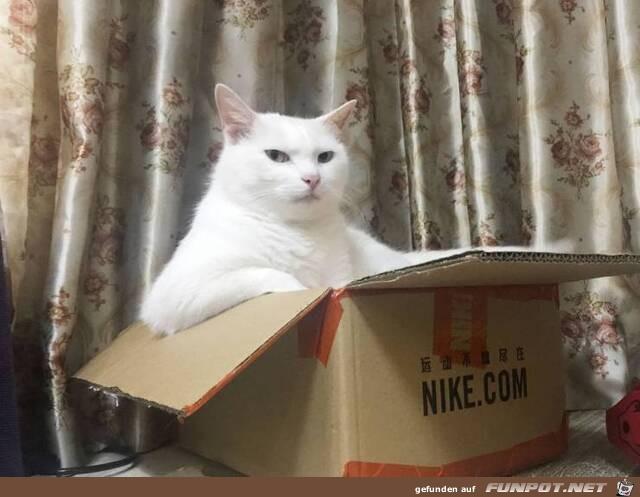 Die Katze ist der Boss