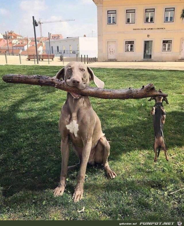 Großer und kleiner Hund mit Stock