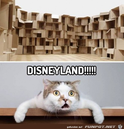 Disneyland für Katzen