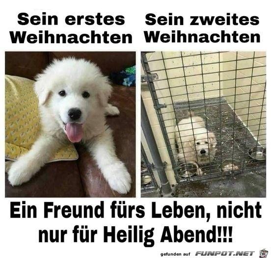 Hunde sind Freunde fürs Leben