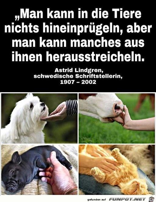 Liebevolle Zuwendung bei Tieren