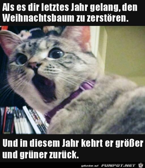 Entsetzte Katze