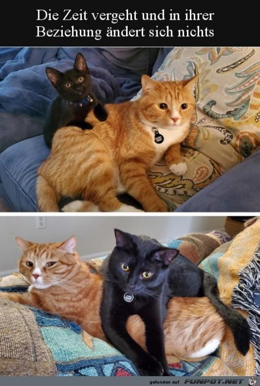Eine Katzen-Freundschaft