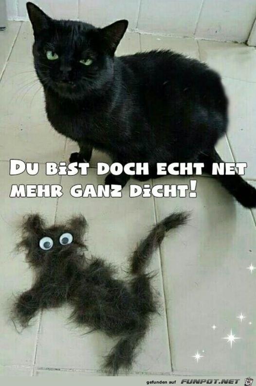 Katze ist empört