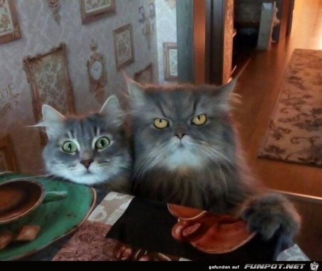 Diese Katzen wollen etwas