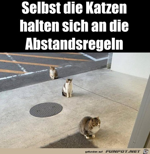 Katzen halten Abstand