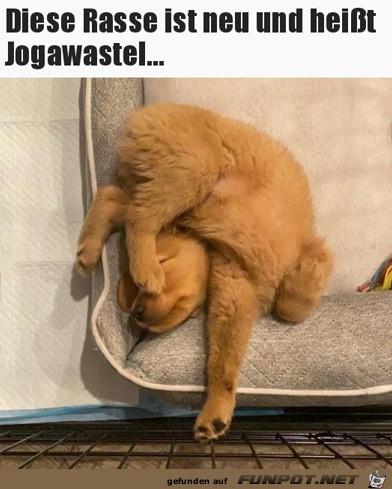 Verrenkter Hund