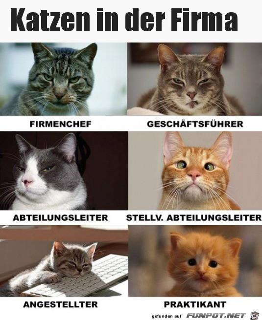 Katzen in der Firma