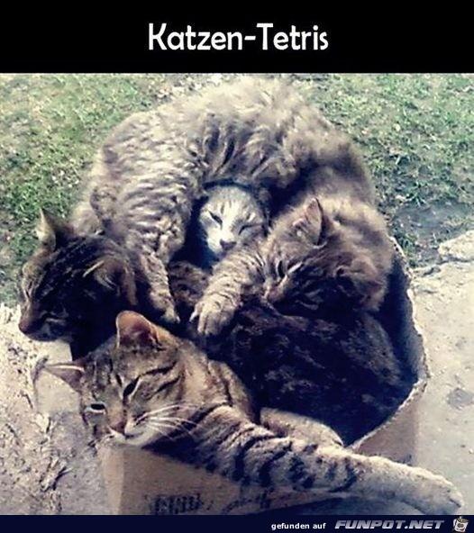 Katzen-Tetris