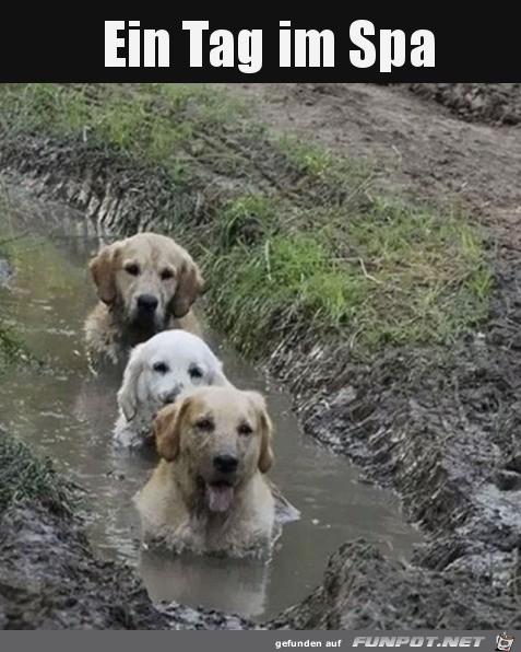 Wellnesstag für Hunde