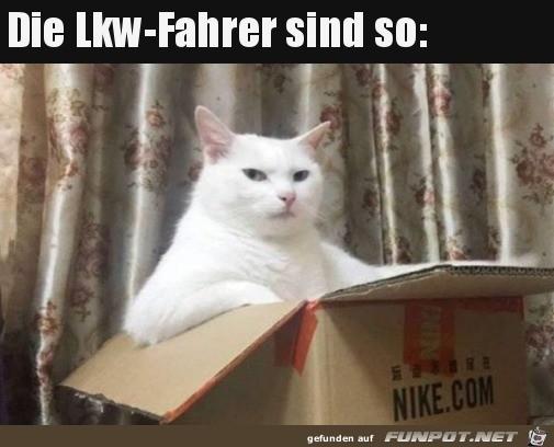 Katze guckt wie LKW-Fahrer