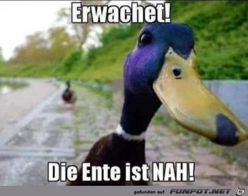Die Ente ist nah