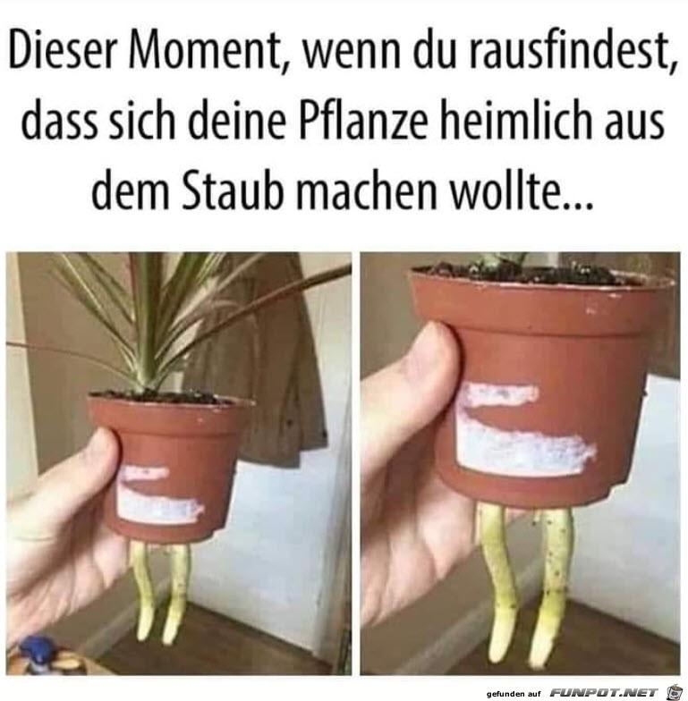 Die Pflanze ist weg