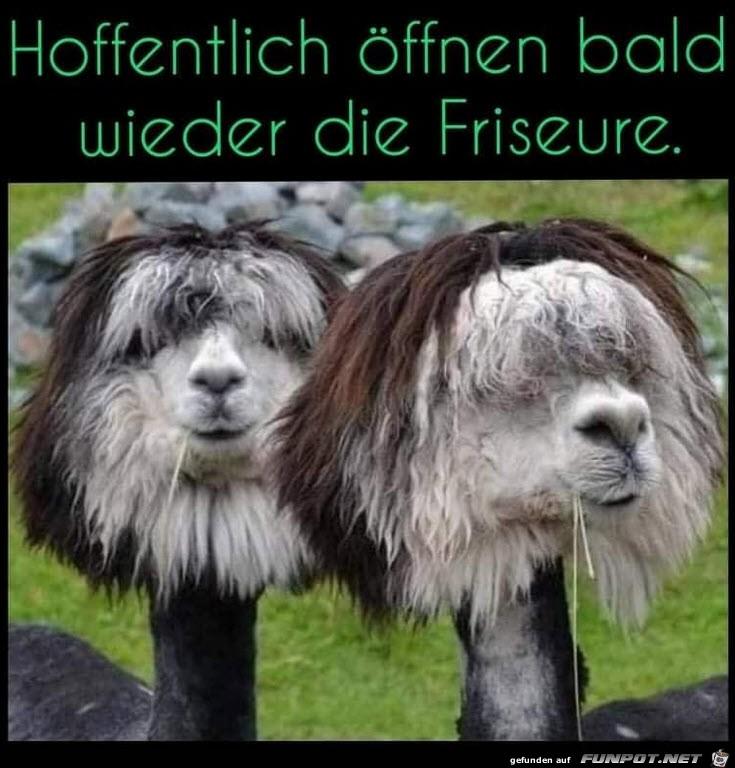 Die Friseure