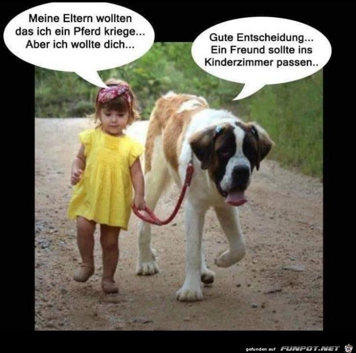 Kleinen Hund genommen