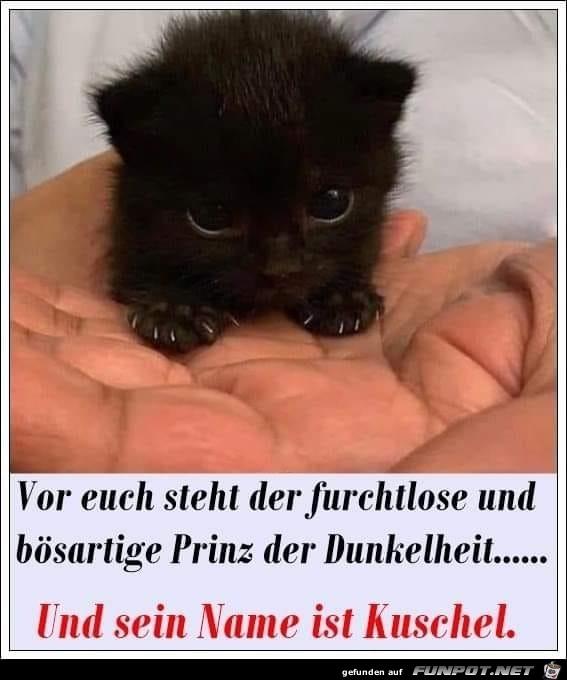 Gefährliche-Katze.jpg auf www.funpot.net