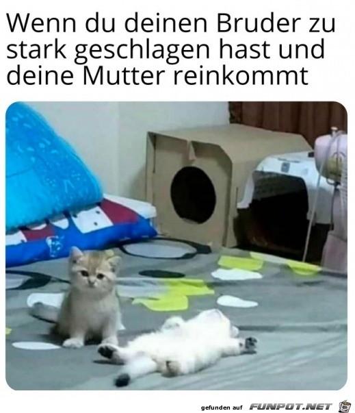 Katze guckt schuldig