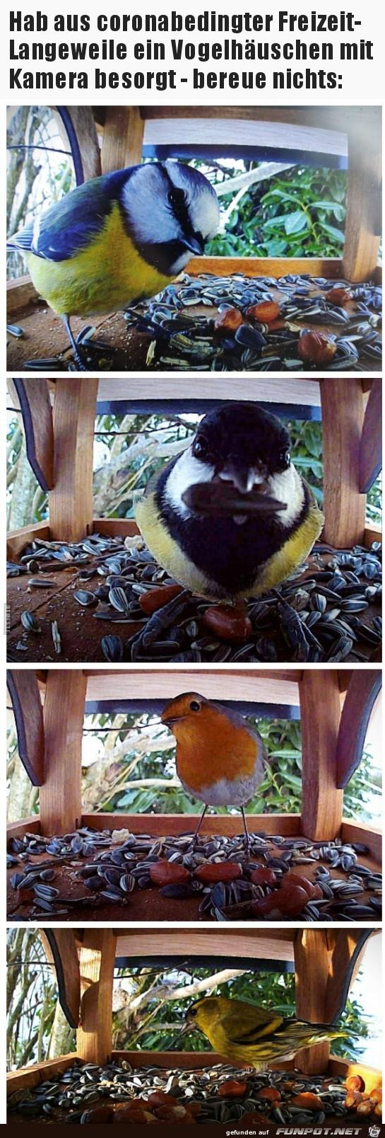 Vogelhaus mit Kamera