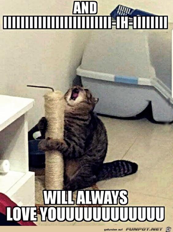 Katze singt