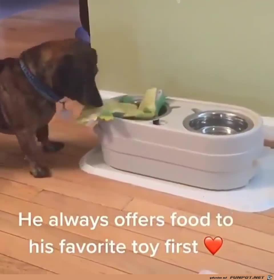 Lieber Hund