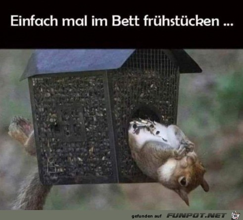 Eichhörnchen frühstückt im Bett