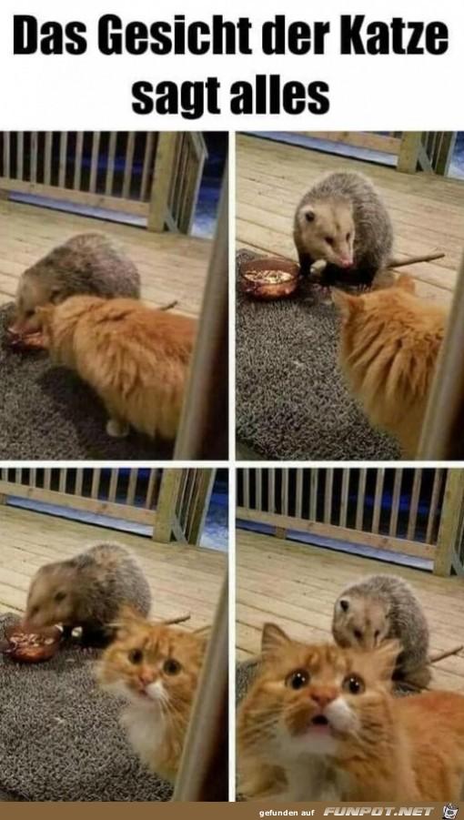 Die Katze ist entsetzt