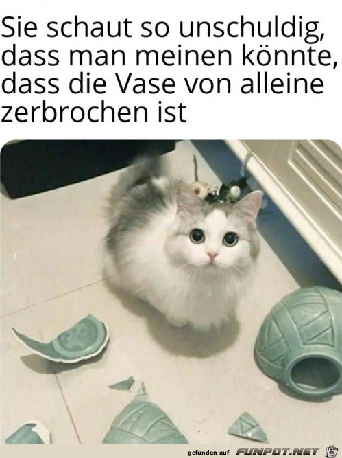 Unschuldiges Kätzchen