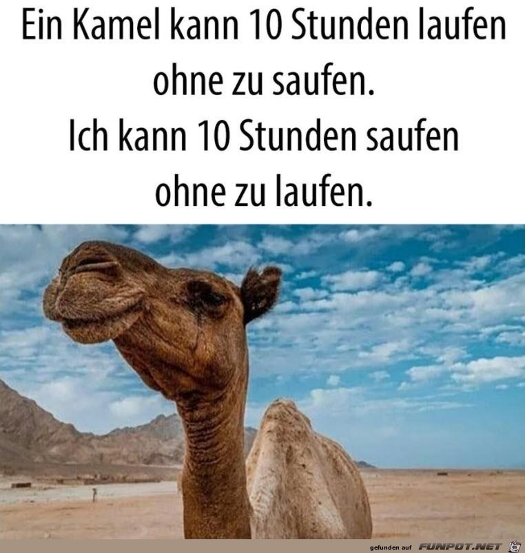 Ein Kamel kann...