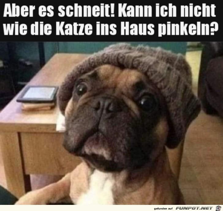 Hund hat eine berechtigte Frage