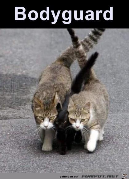 Tierische Bodyguards