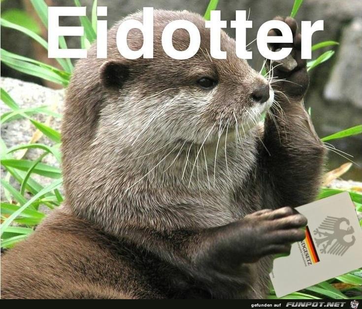 Eid-Otter