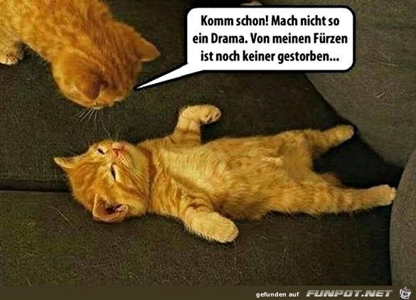 Katze soll kein Drama machen