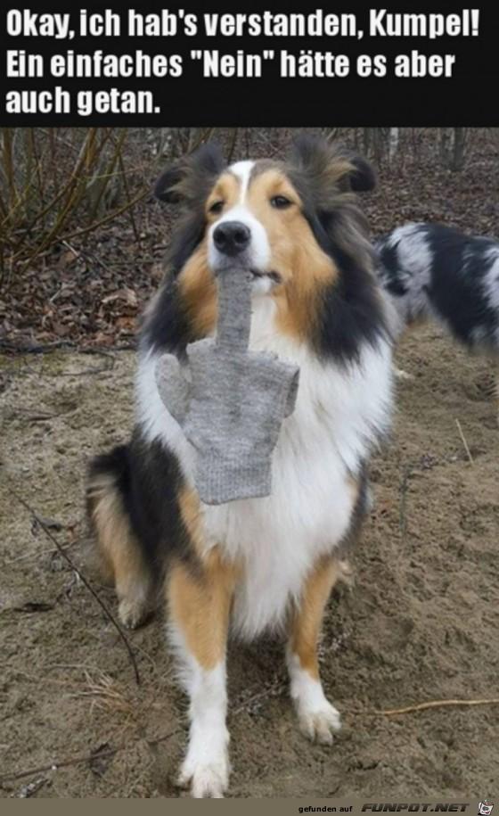 Hund zeigt seine Meinung