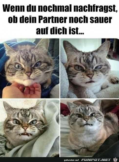 Grimmiges Katzengesicht