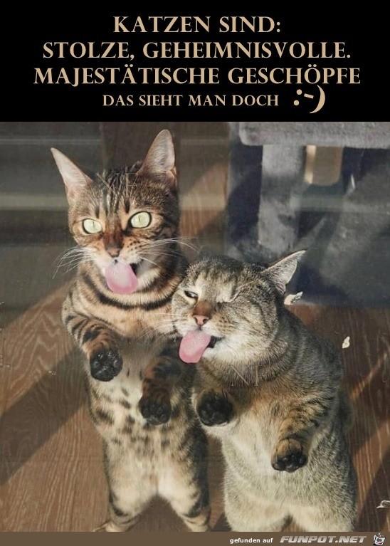 Katzen sind stolze Geschöpfe