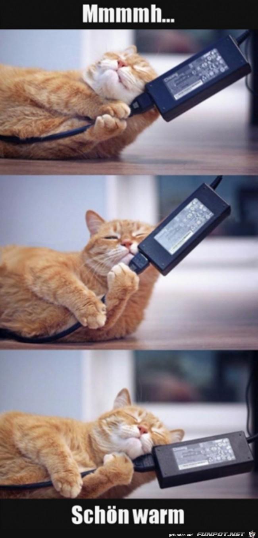 Katze mag es warm