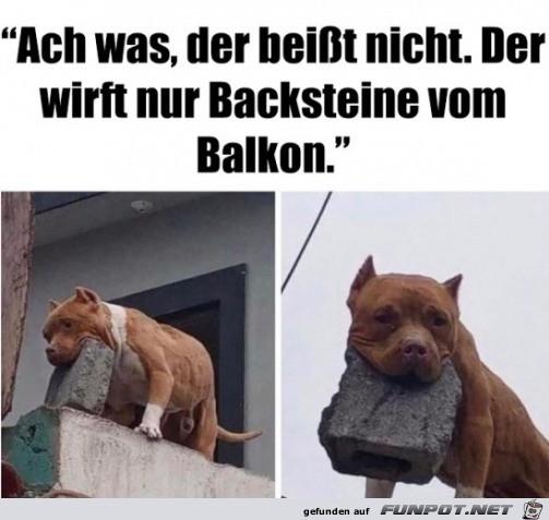 Der Hund beißt nicht