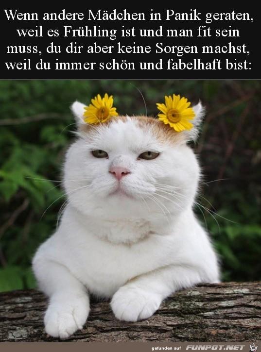 Hübsche Katze