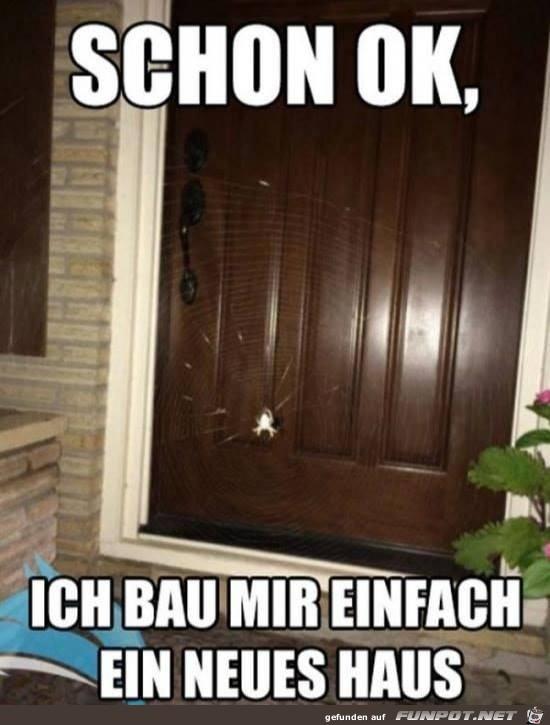 Spinne an der Haustüre