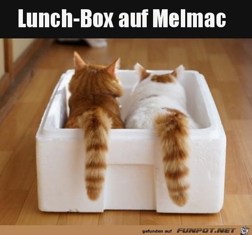 Lunchbox von Alf