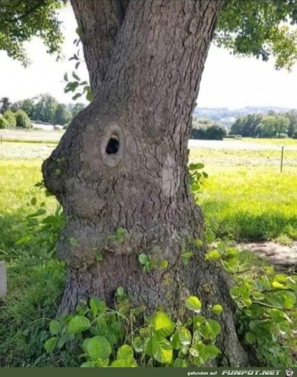 Osterhasen-Baum