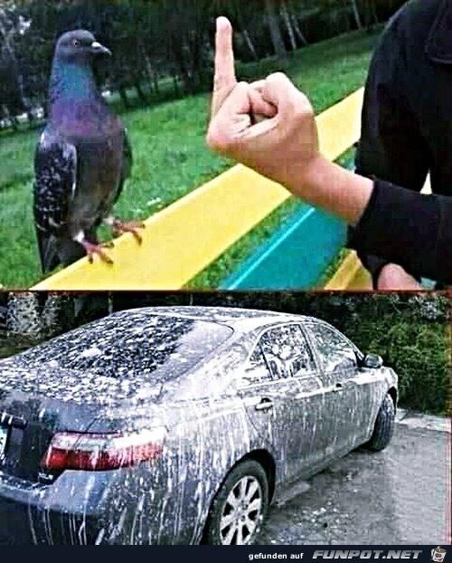 Taube hat sich gerächt