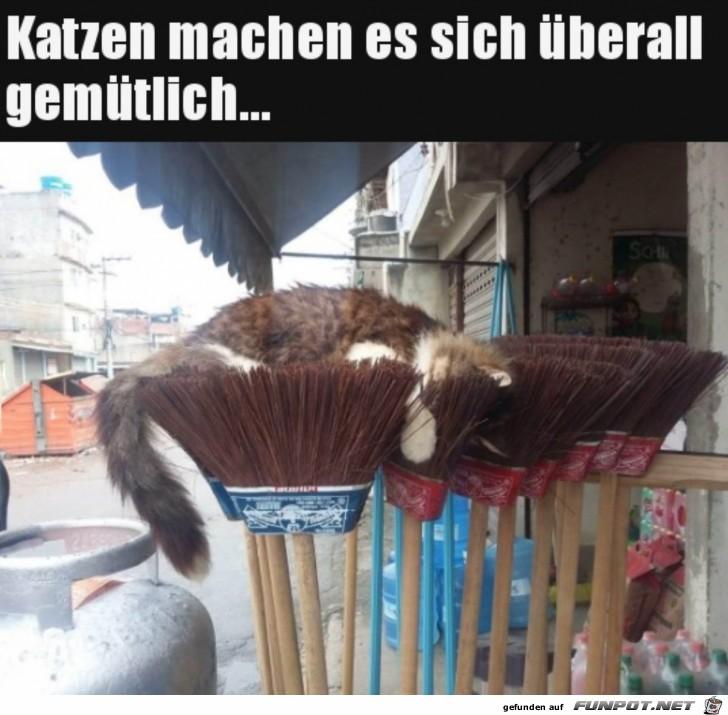 Bequemer Katzen-Schlafplatz