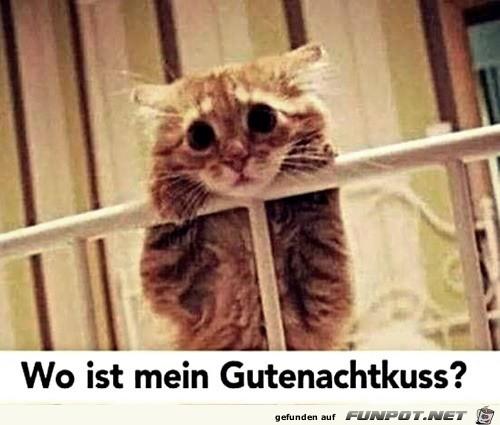 Katze will Gute-Nacht-Kuss