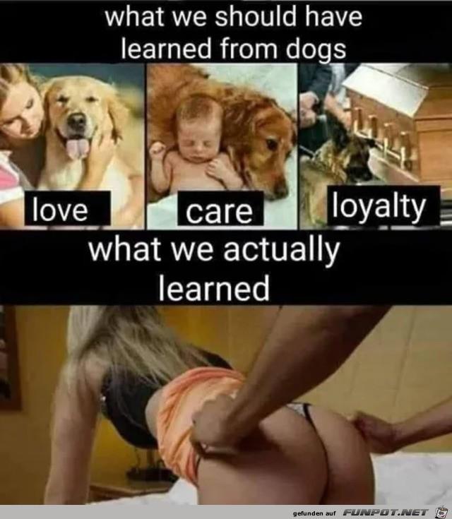 Was wir von Hunden lernen sollten
